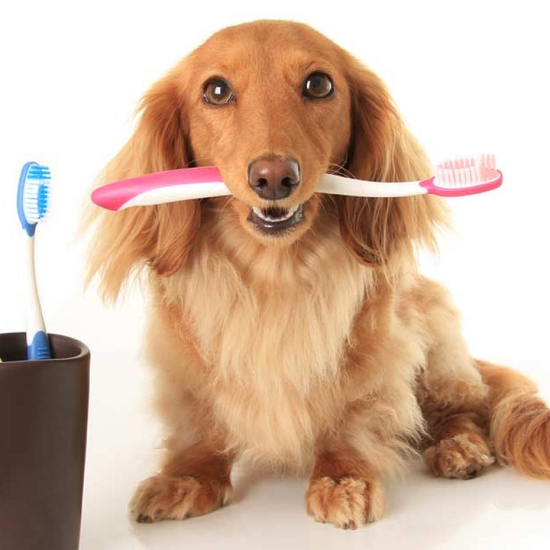 dog-toothbrush-fb
